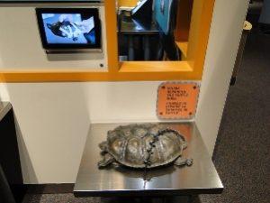 Turtle rescue exhibit