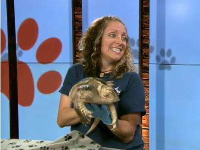 cp24 – Ontario Turtle Conservation Centre