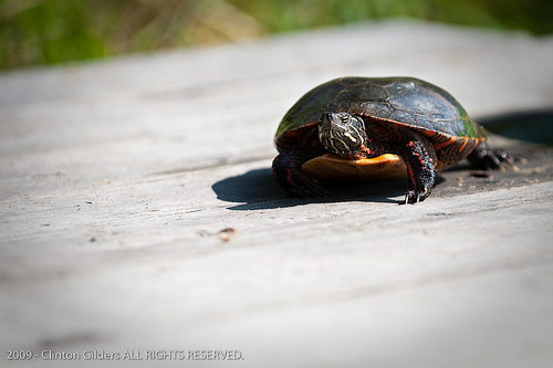 turtle on a dock