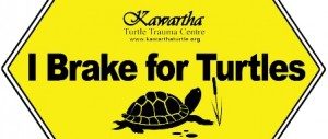 Do you brake for turtles? Spread the word