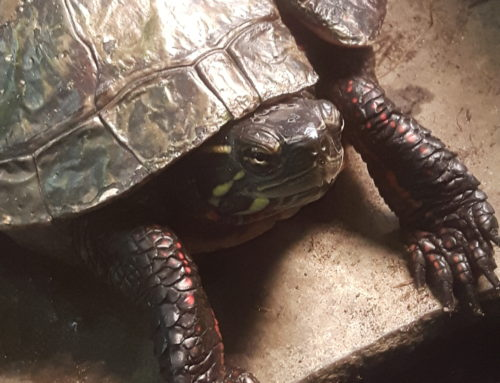 Part 2:  A Tale of Two Turtles!